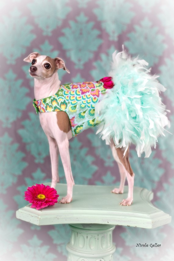Mariage - Vintage Mint Feather Harness Dog Dress