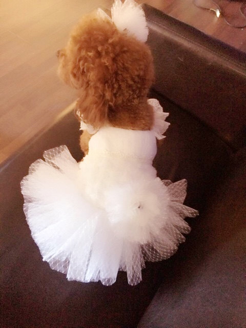 Mariage - Custom Made Dog wedding dress made of Polka Dot tulle and Hand cut  flowers details