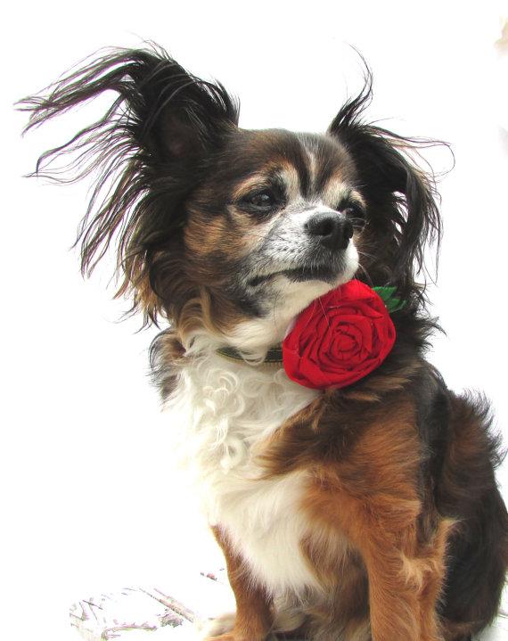 Свадьба - Dog Collar Flower- Red Rose Collar Attatchment-clip on