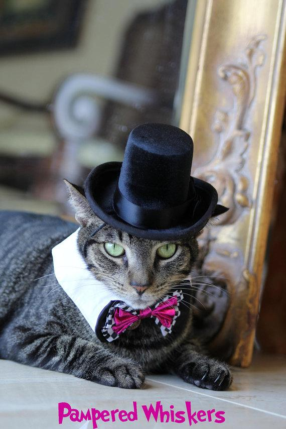 Свадьба - The Aristocrat Black top hat for cats & Dogs and Bowtie collar