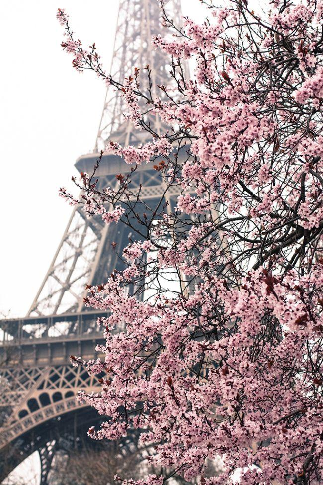 Hochzeit - Pretty In Pink Paris