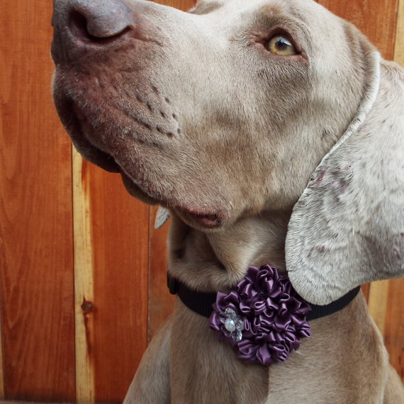 Hochzeit - Light Purple Satin Flower Dog Collar Accessory for Cats and Dogs - Great Wedding Accessory for your pet!