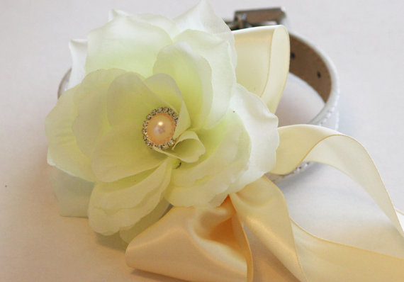 Свадьба - Ivory wedding dog collar, Floral dog Collar- Flower with Ivory Rhinestone, Pet Wedding Accessory, Dog Lovers, Ivory Wedding idea