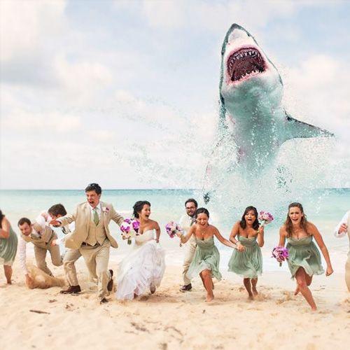 Wedding Theme Photos 2343740 Weddbook