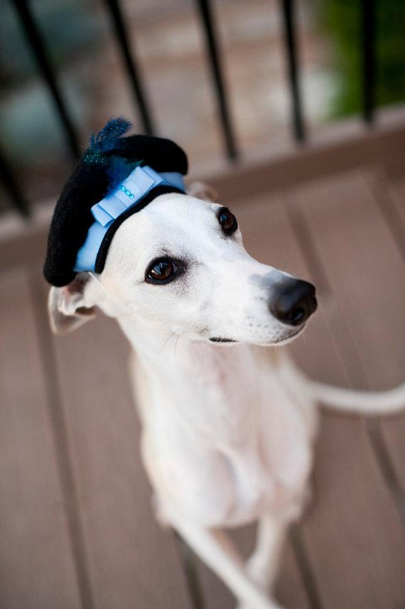Свадьба - Dog Beret Hat, Wedding Blues