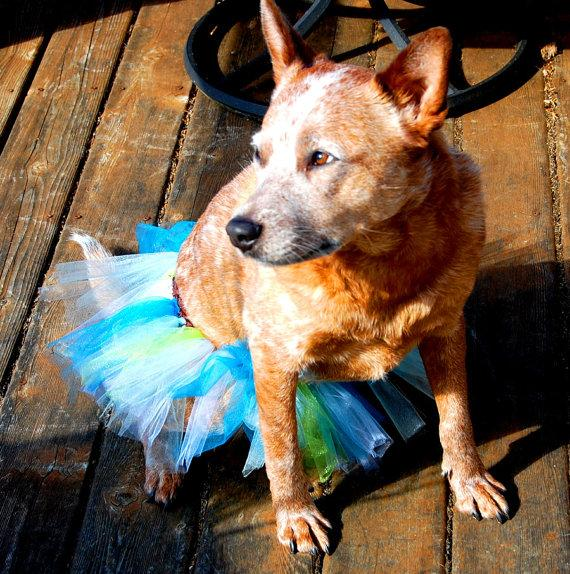 Свадьба - Custom Party Dog Tutu, Custom Birthday Dog TuTu, Custom Tulle Dog Tutu, Custom Parade Dog Tutu, Custom Wedding Dog Tutu, Custom Dog TuTu