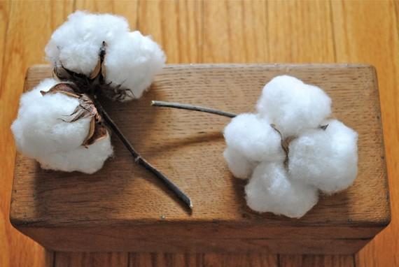 Свадьба - Natural Cotton Bolls - Raw Cotton - DIY Cotton - Bridal - Wedding - Home Decor - Gift