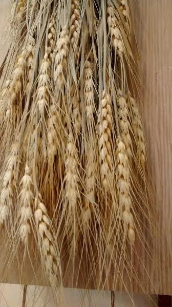 Свадьба - Dried Natural Wheat Stem Bunches - 3oz