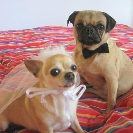 Свадьба - DOG costume - Pet BRIDE and GROOM costume - As featured in Etsys To have and to Hold Wedding Event