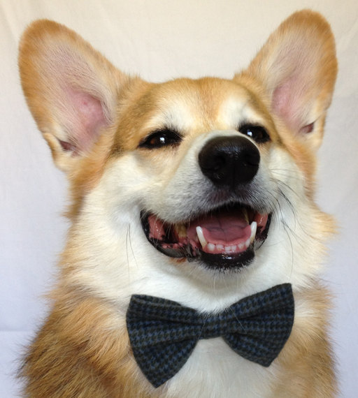 Свадьба - Custom Bow Tie for a Dog or a Cat