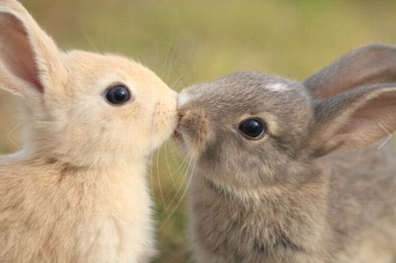 Wedding - Community Post: The 25 Most Romantic Animals That Ever Lived