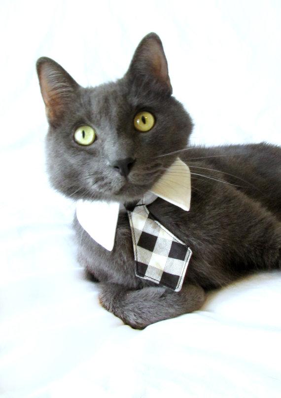 Свадьба - Dog/Cat black plaid necktie/bowtie on a shirt style collar