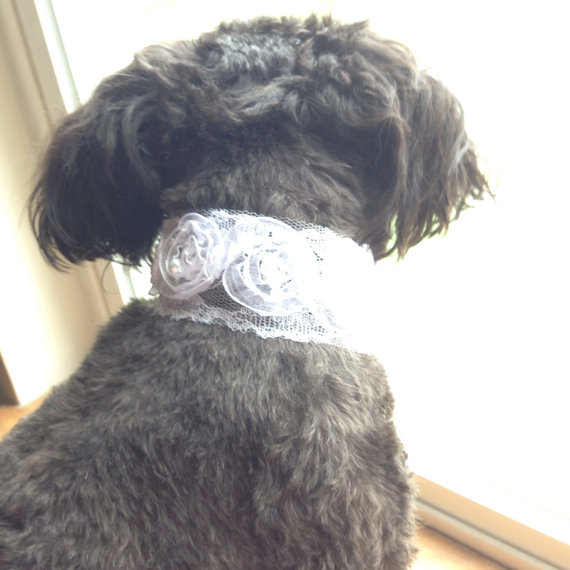 زفاف - DOG FLOWER COLLAR - Simple white flower & pearls Pet Wedding,Ties on, Pet Flower, Dog Wedding, Pet Corsage, Dog flower , Dog Bow