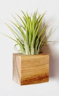 Wedding - Air Plant & Magnetic Planter