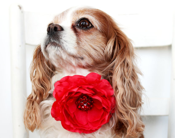 زفاف - Dog Collar Flower Add On / Red Cottage Rose  / Special Occasion / Red Rhinstone Center