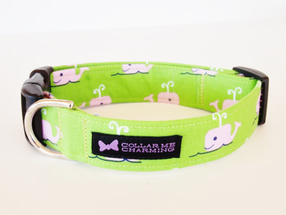 Свадьба - Dog Collar Beluga