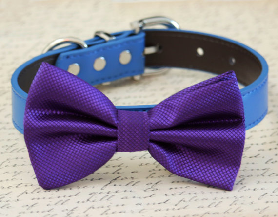 زفاف - Purple dog Bow tie, Blue and Purple dog bow tie, pet wedding accessory, dog lovers, dog birthday git, some thing blue, wedding accessory