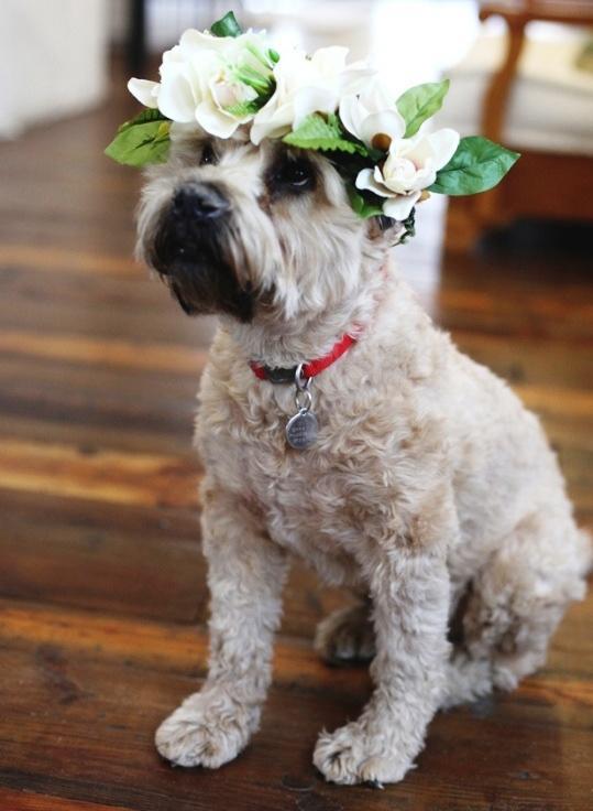 Mariage - Wedding Decorations