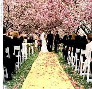 Wedding Theme - Cherry Blossom Wedding... #2359641 - Weddbook