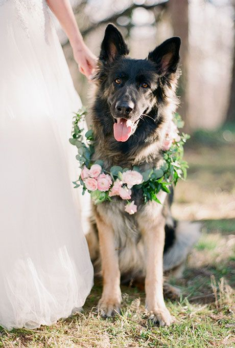 Свадьба - Ways To Include Pets In Your Wedding