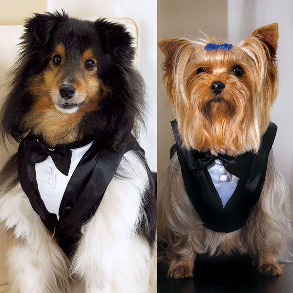 زفاف - Pet Tux
