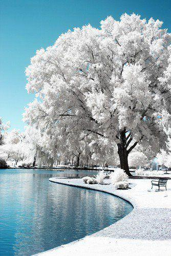 Mariage - Beautiful Pond And Ice Tree