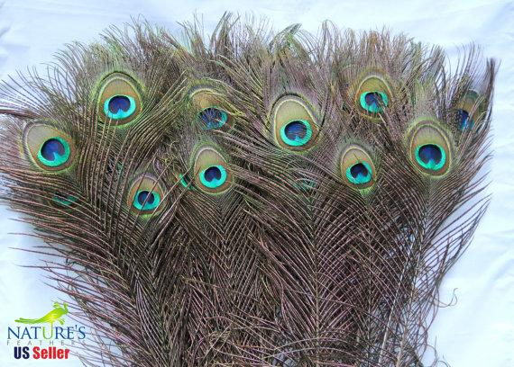 Mariage - 50 Natural Peacock Eye Feathers (25-30 inches ) Top Quality