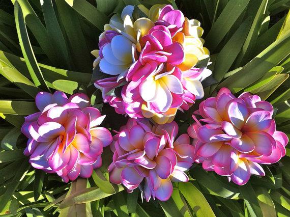 Hochzeit - Blue Hawaii Plumeria Frangipani Packag