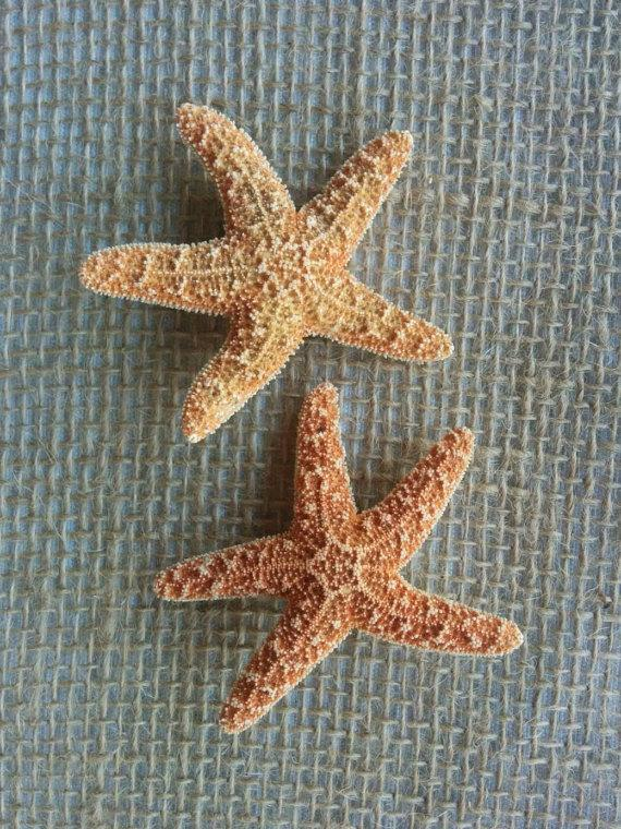 starfish hair accessories starfish hair clips beach