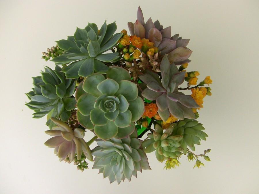 Wedding - DIY Wedding Bouquet, DIY Succulent bouquet.