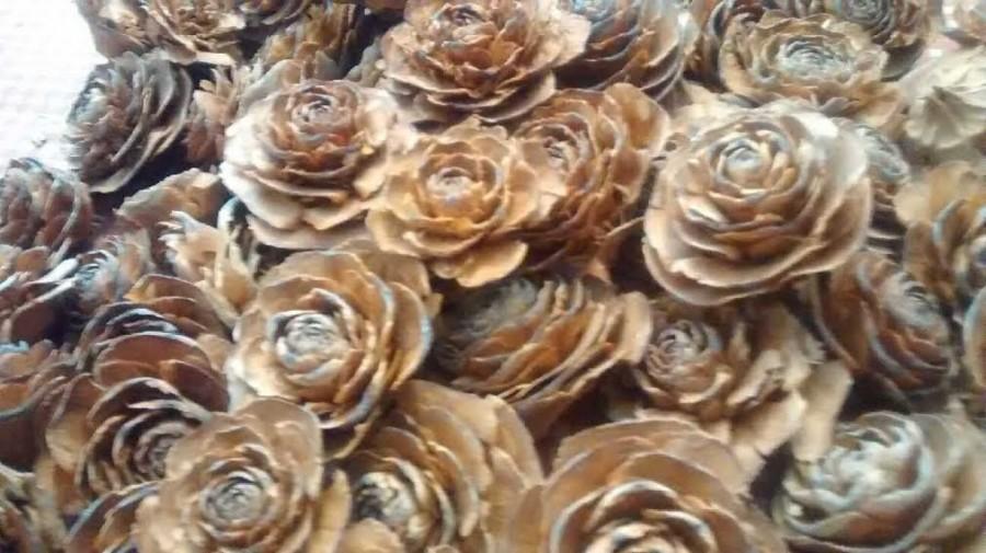 زفاف - 100 Cedar Rose Pinecones (single heads)  - Perfect For Rustic Country Weddings