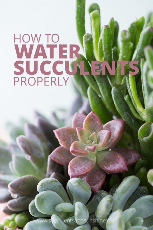 Hochzeit - How To Water Succulent Plants