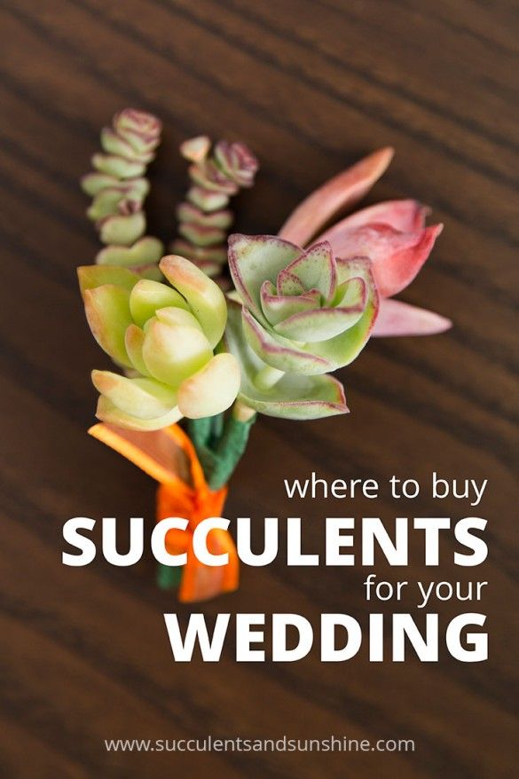 Wedding - Where To Buy Succulents For Your Wedding