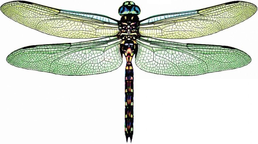 5 X 3D Dragonflies DAINTREE GREEN Rainforest, Wall Decor, Art, Gift, Wedding