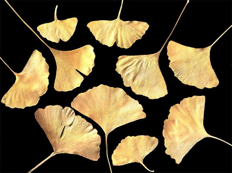 Wedding - REAL PRESSED GINGKO Leaves Hand Painted Golden - Perfect for Weddings, Decorations, Art & Craft Projects, Holidays, Cards, ScrapBooking