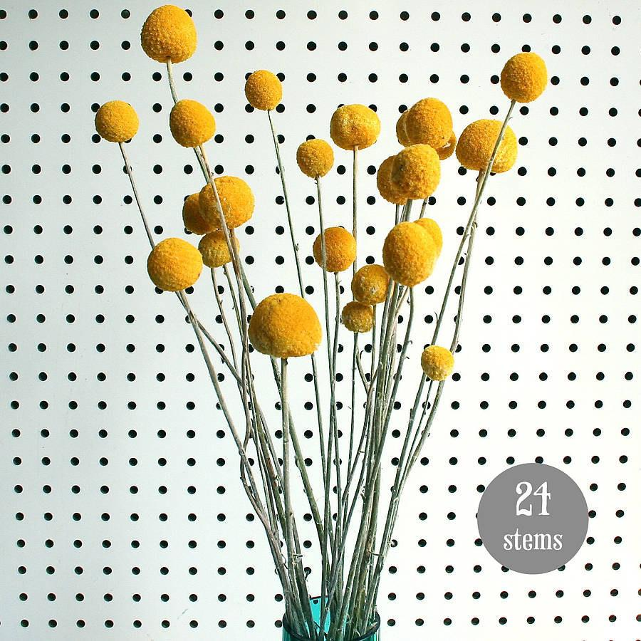 Свадьба - Craspedia - BIlly Balls - BIlly Buttons Dried Yellow Flowers