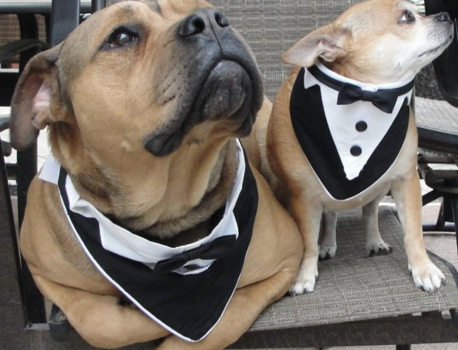 Dog Tuxedo Bandanna Pet Wedding Bandana Scarf Formal Tuxedo Tie ...