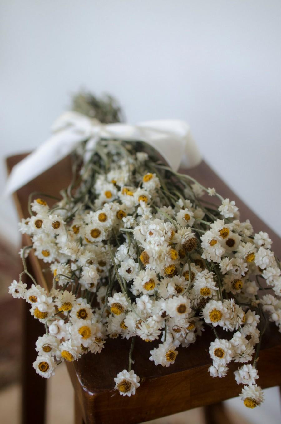 Свадьба - Dried ammobium bunch,  winged everlasting dried flowers, white wedding flowers, white dried flowers
