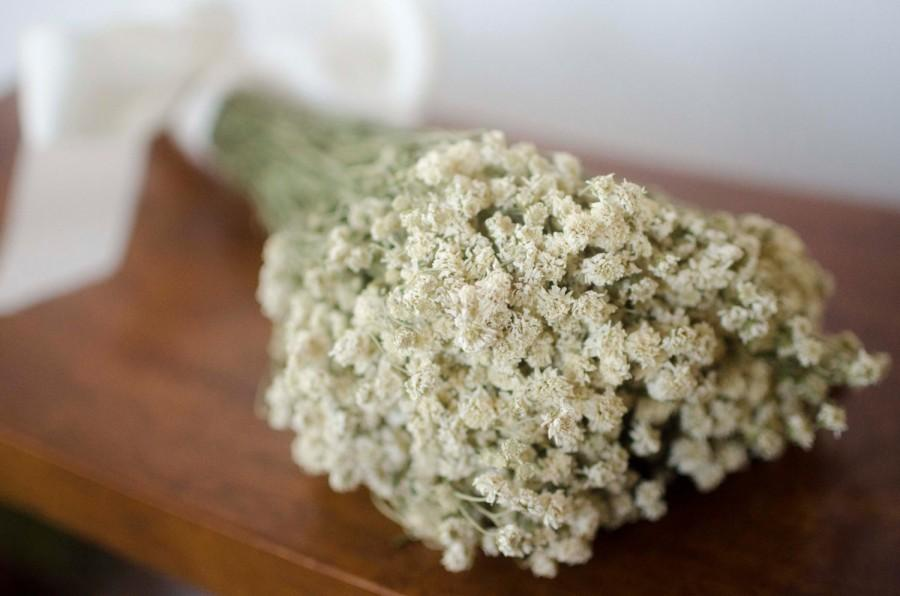 Свадьба - Dried achillea of pearl bunch, white dried flowers, white wedding flowers, filler, dried flower filler, white dried flowers
