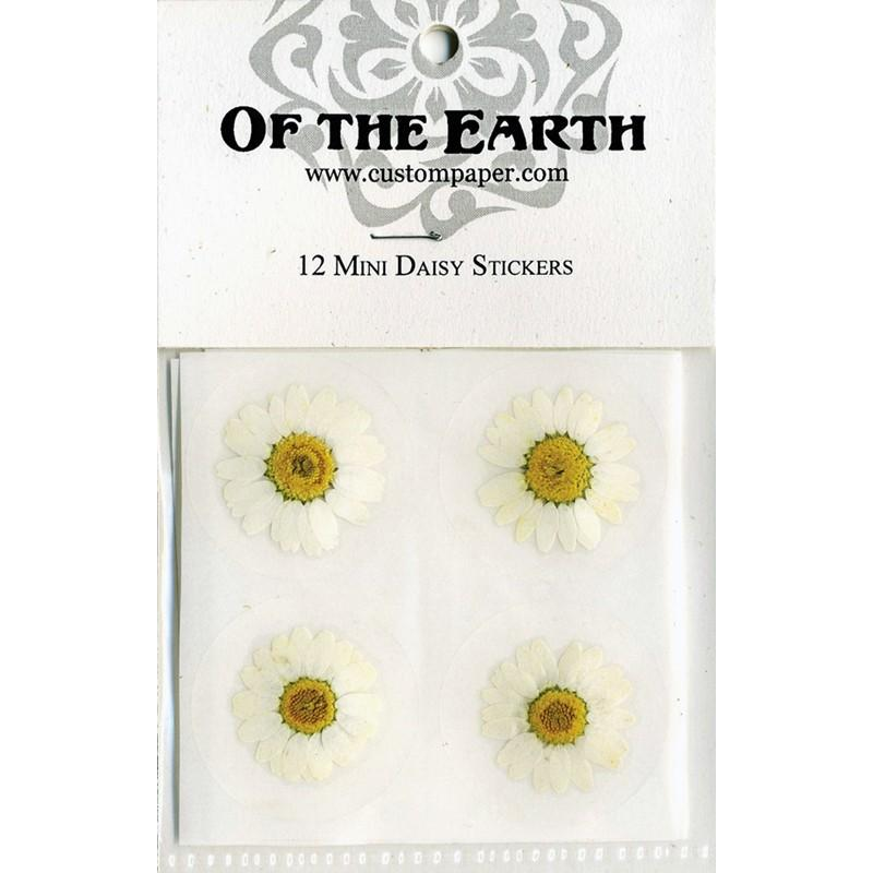 """Mariage - Mini Daisy 1.5"""" Real Pressed Flower Decorating Stickers - pack of 12 - Not Dyed"""