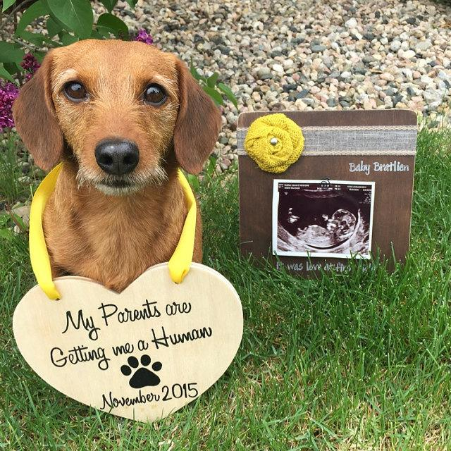 Baby Announcement Wooden Heart For Dogs My Parents Are Getting – Baby Announcement to Parents