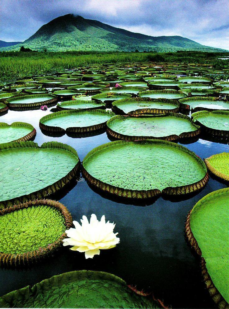 Wedding - Moonlights UNESCO WHS Blog: Brazil - Pantanal Conservation Area