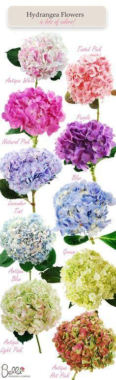 Hochzeit - Hydrangea Colors - Ruggedthug