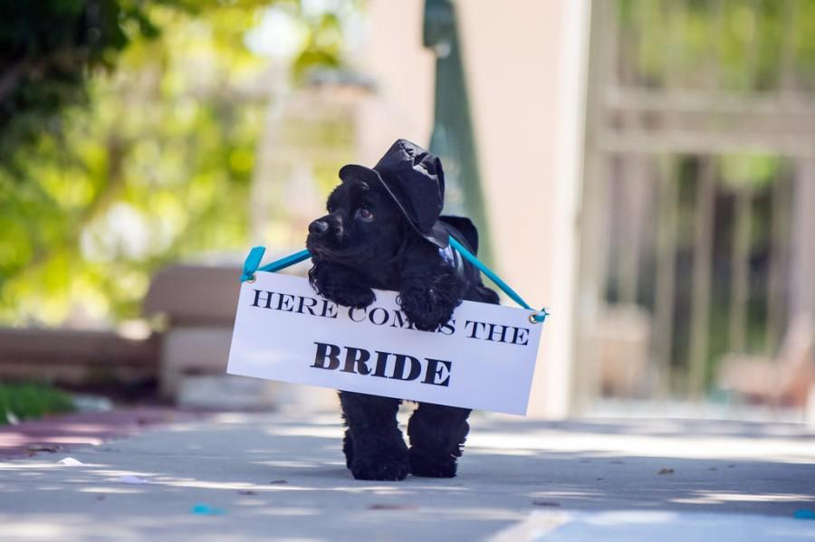 Wedding - Here Comes The Bride