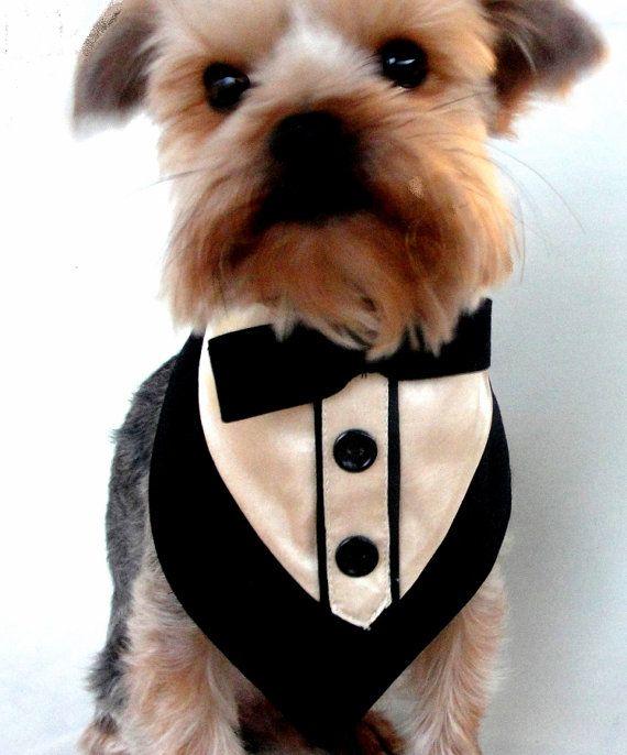 زفاف - Little Dog Wedding Tuxedo Collar Formal Bandana Tuxedo Collar Pet Bandanna Formal Wear Black Tux With Tan Satin Shirt Teacup Tuxedo