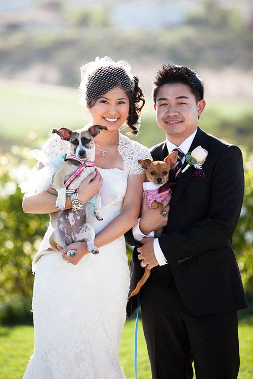 Wedding - Wedding Clothing, Accessories And Decor For Dogs