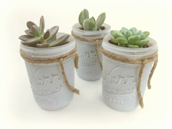 Mariage - Succulent in White Mason Jar Wrapped in Twine Rustic Vintage Country Wedding Favors