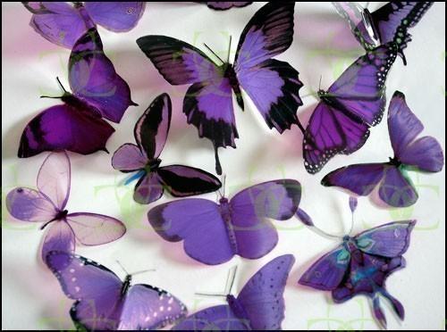 Wedding - 12 x Mixed Purple 3D Transparent Butterflies