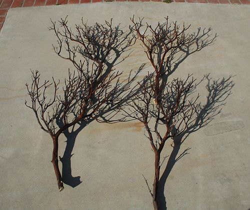 """Mariage - 20 FULL 18"""" Manzanita Branches for centerpieces or wishing trees for wedding"""