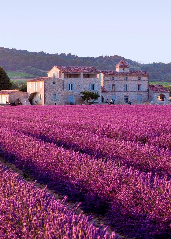 زفاف - Honeymoon destination-Plateau de Valensole, Provence, France